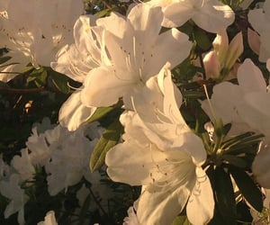 flowers, aesthetic, and white image