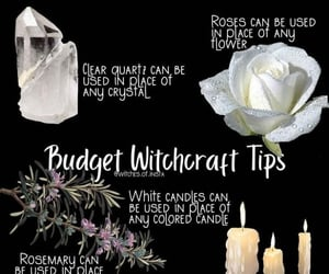 budget, rose, and white image