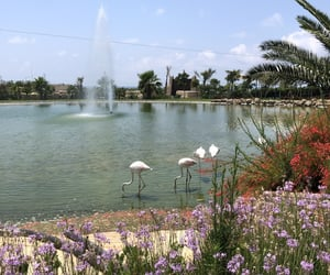 flamingo, nature, and zoo image
