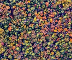 above, autumn, and forest image