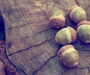 acorn, autumn, and nature image