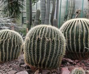botanical garden, cactus, and cactuses image