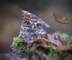 adorable, bird, and birds image