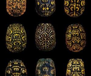 box turtle shells and diverse shell pattern image