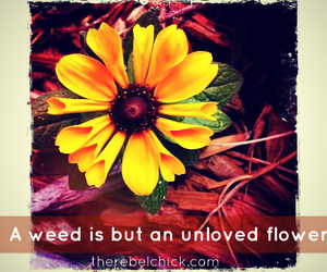 flowers, hipster, and life image