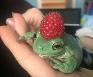 animal, frog, and adorable image