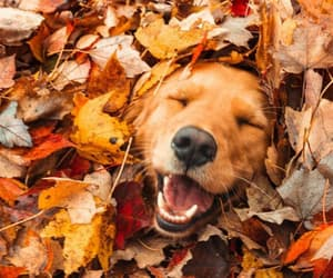 dog, puppy, and fall image