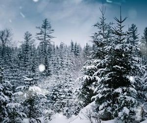 Maine, nature, and snow image