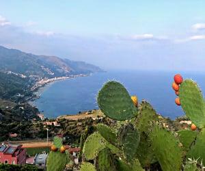 cactus, italia, and mare image