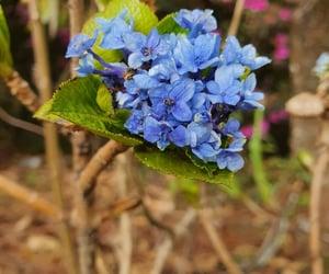 beauty, flower, and campos do jordão image