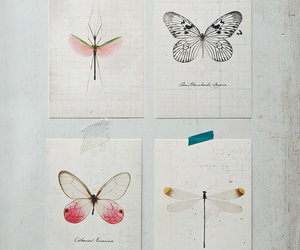 butterfly, dragonfly, and postcard image