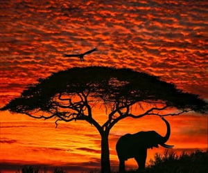 nature, sunset, and africa image