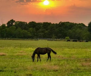 animals, country living, and horses image