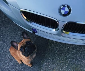 bmw, silver, and dog image
