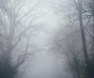 article, fall, and fog image