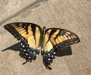 butterfly, aesthetic, and yellow image