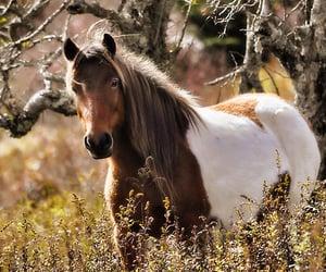animals, beautiful, and horse image