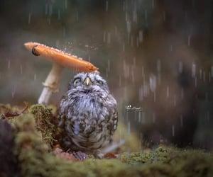 owl, rain, and animal image