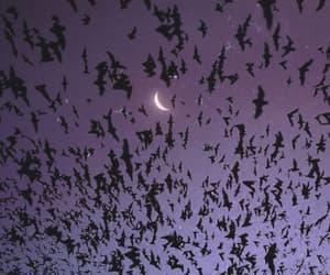 bats, moon, and purple image