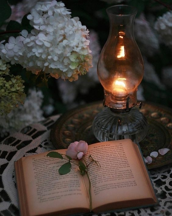 flowers, book, and light image