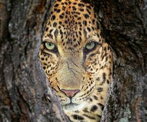 Animales, naturaleza, and belleza image