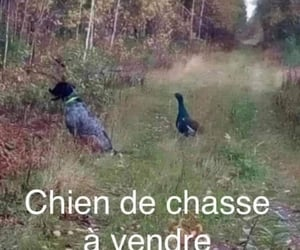 canard, francais, and chien image