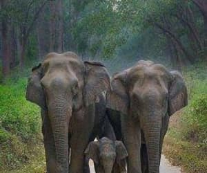 beautiful family, amazing elephants, and save animals image
