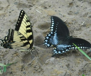 animals, butterfly, and insects image