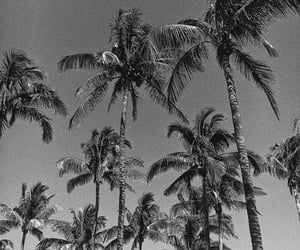 aesthetic, beach, and black image
