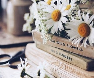 books, daisy, and flowers image