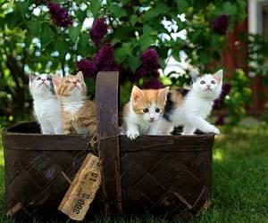 awwwww, fuzzy, and kitty image