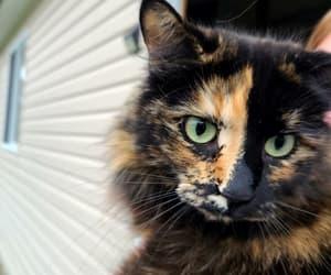 cats, fashion, and like image