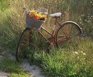 aesthetic, bicycle, and magical image