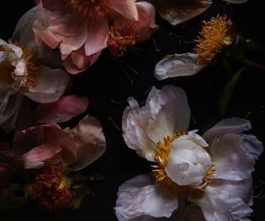 dark and flowers image