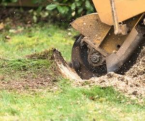 stump grinding, stump grinding cost, and stump grinding edmonton image