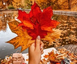 article, colors, and fall image