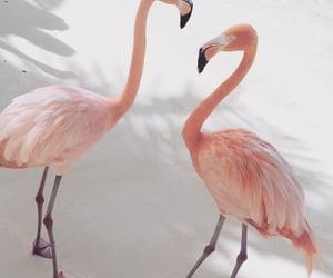 amazing, animals, and lovely image