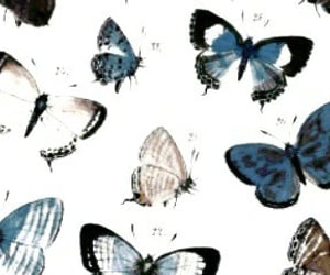 butterfly, header, and blue image