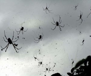 Halloween, spiders, and from the sky image