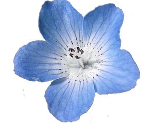 blue flower, flower, and blue image