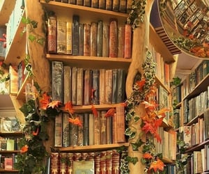 book shelves and books image