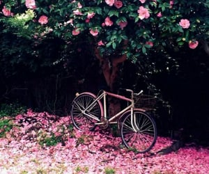 aesthetic, bicycle, and dark image