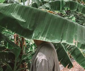 banana leaf, boy, and grunge image