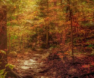 autumn colors, etsy, and green and yellow image