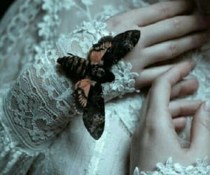 butterfly, lace, and moth image
