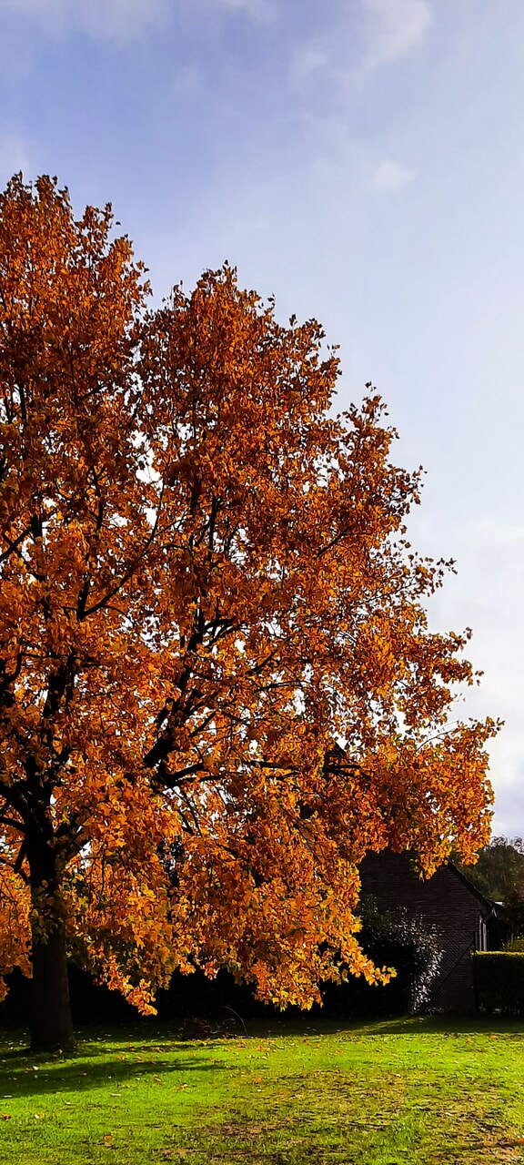 fall, nature, and tree image