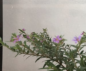 autoral, flowers, and plants image