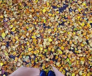 autumm, mood, and fall image