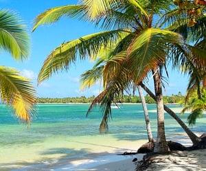 beaches, tropics, and escape image