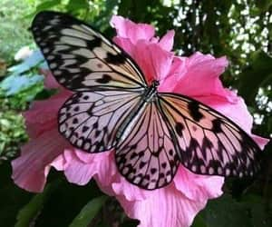 Animales, butterfly, and flores image